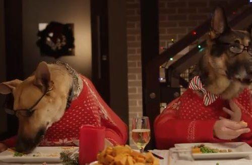 13 cani e 1 gatto: ecco la cena di Natale più DIVERTENTE che abbiate mai visto